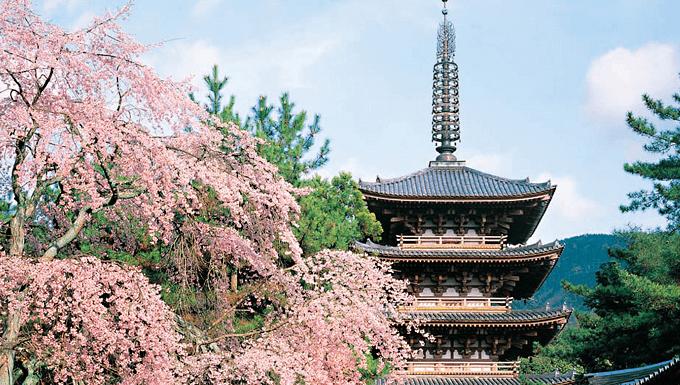 京都の貸金業者